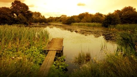 Pond near Pooley Bridge